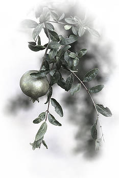 Pomegranate by Goyo Ambrosio