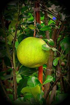 Pomelo - Citrus Maxima by Silvie Gunawan
