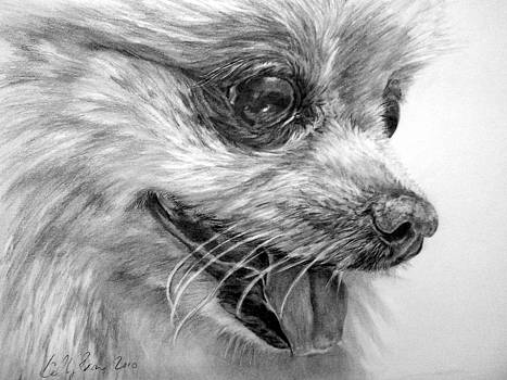 Pomeranian by Skyrah J Kelly