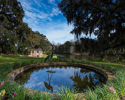 Pond At Middleton Gardens By Chris Rogers