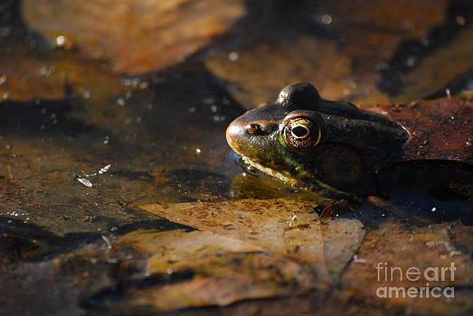 Pond Frog by Evelyn Allen