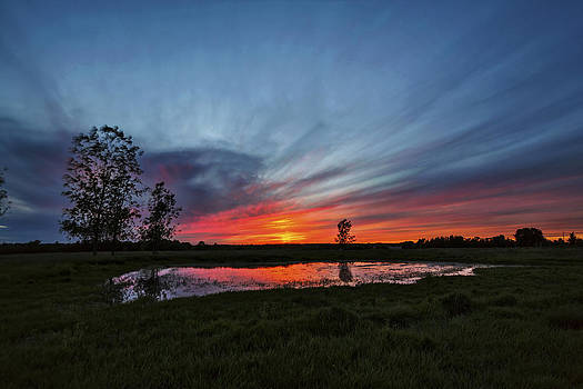 Pond in the Pasture by Matt Molloy