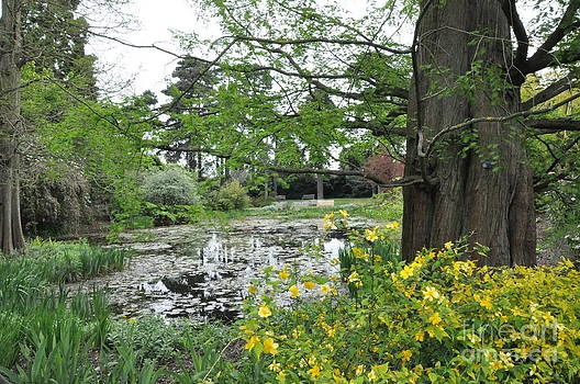 Pond in the Woodland Garden in Kew by Tanya  Searcy
