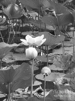 Pond by Melissa Lightner
