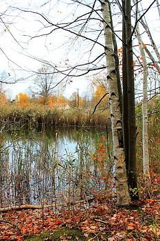 Pond by Rebecca Frank