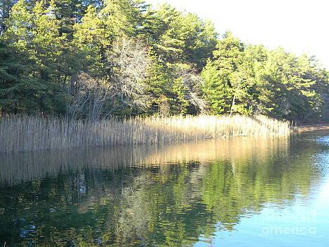 Pond Reflection by Spirit Baker