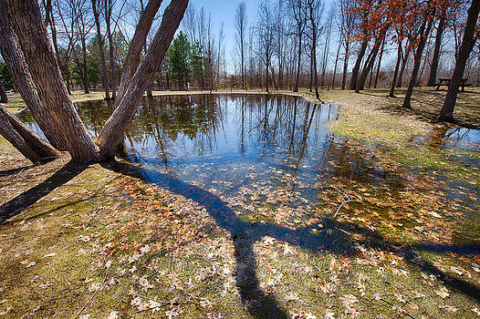 Pond Reflections by Christopher Broste