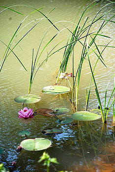 Pond  Reflections by Elmer Baez