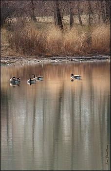 Kae Cheatham - Pond Reflections