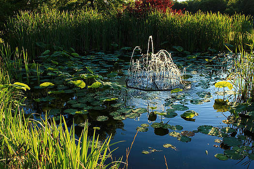 Pond Water by Jim Cotton