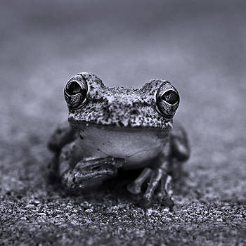 Pondering Frog Bw by Laura Fasulo