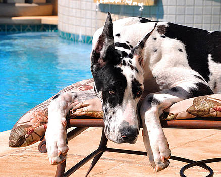 Pondering Poolside by Tony Franza
