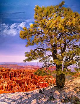 Ludmila Nayvelt - Ponderosa Pine