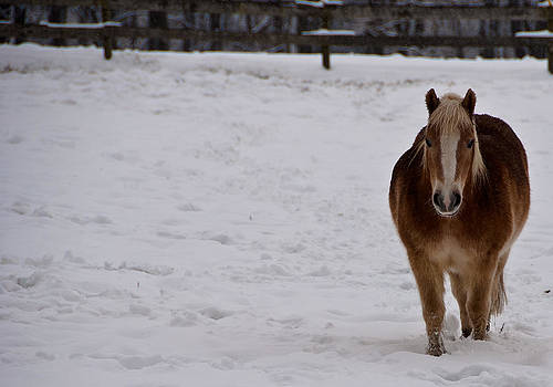 Pony in Snow by Nickaleen Neff