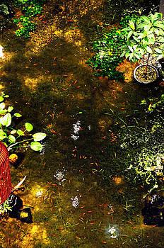 Pool Fish by Money Sharma