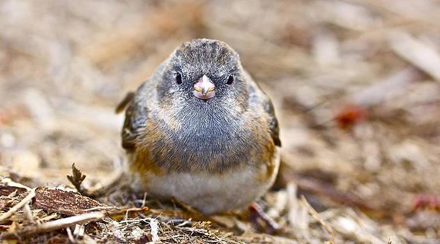 Jennifer Lamanca Kaufman - Poor Little Birdie