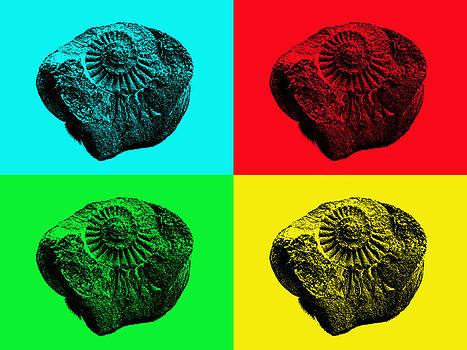 Pop Art Ammonite by Robert Gipson