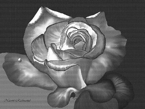 Naomi Richmond - Popart Rose