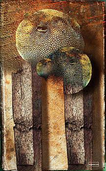 Pope by Janet Kearns