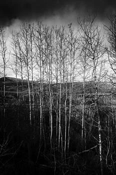 Poplar Grove by Rod Sterling