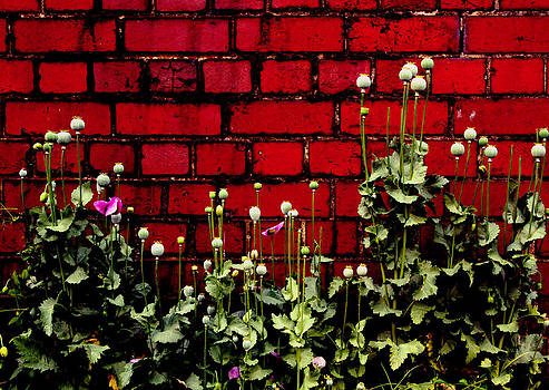 Poppies and Bricks by Anthony Bean