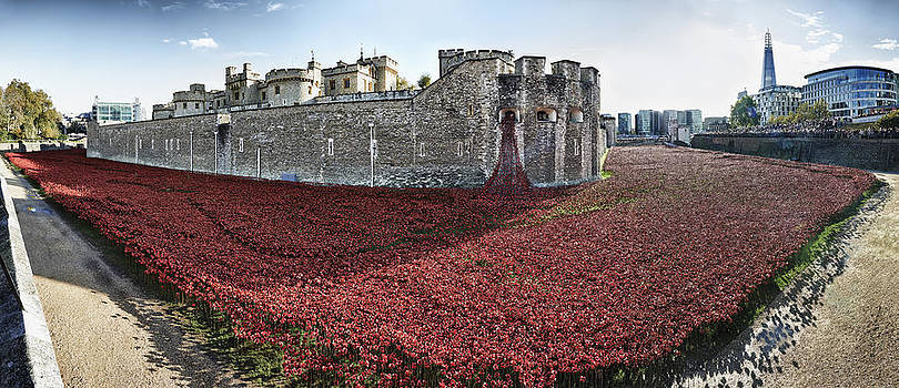 Poppies at Tower Of London by Adrian Brockwell