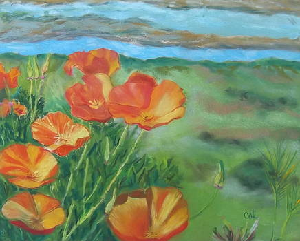 Poppies by Calliope Thomas