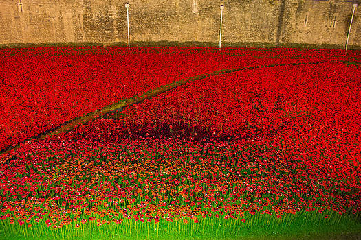 Poppies for the fallen by Andrew Lalchan