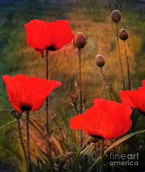 Poppies by Gail Bridger
