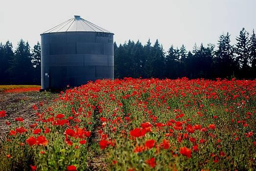Poppies by Mamie Gunning
