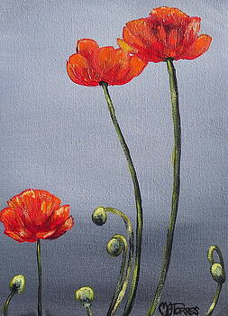 Poppies by Melissa Torres
