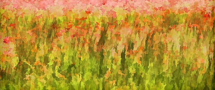 David Letts - Poppies of Tuscany III