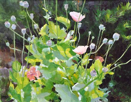 Poppies by Scott Harding