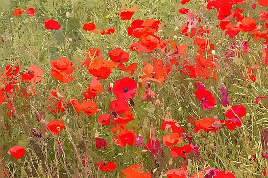 David Pringle - Poppies VII