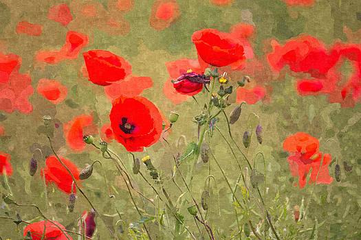 David Pringle - Poppies VIII