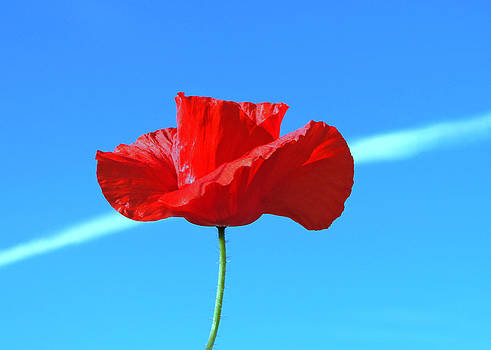 Poppy And The Con Trail by Barrie Woodward