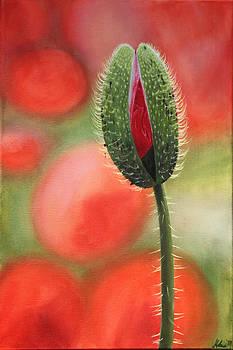 Poppy Blossom by Helene Schmittgen