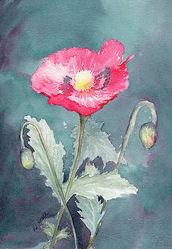 Poppy by Diane Hall