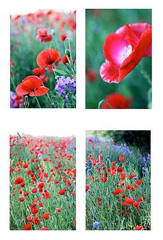 Poppy Field 2 by AR Annahita
