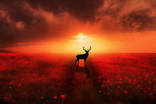 Poppy Field Dreams by Jennifer Woodward