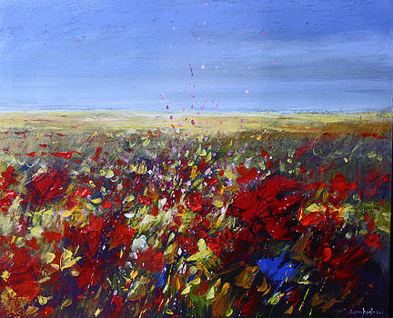 Poppy field by Mario Zampedroni