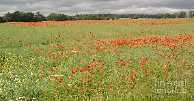 Poppy field today by Geoff Cooper