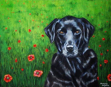 Michelle Wrighton - Poppy - Labrador Dog in Poppy Flower Field