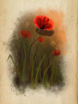 Poppy by Pia Langfeld