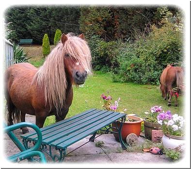Poppy the pony by Geoff Cooper