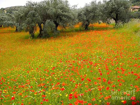Poppy's and Olive Trees by Pauline Margarone