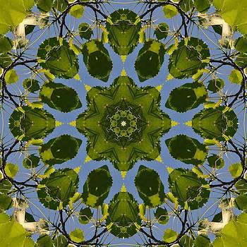 Valerie Kirkwood - Poplar Leaves Kaleidoscope