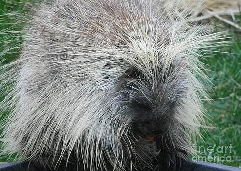 Porcupine by Charleen Treasures
