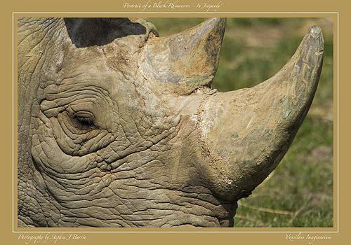Stephen Barrie - Portrait of a Black Rhinoceros       In Jeopardy