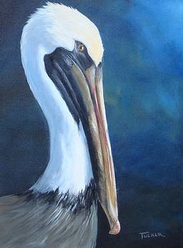 Portrait of a Brown Pelican by Kathleen Tucker